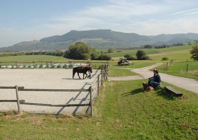 Die gute Heimat für Sie und Ihr Pferd.